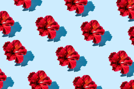 Trendy pop art design of top view hibiscus flower pattern on a blue background.