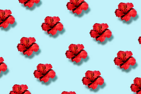 Top view of a trendy pop art pattern of a hibiscus flower. Flat lay