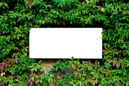 White blank paper over green background with fresh green leaves - top view, flat lay, selective focus, space for text Imagens