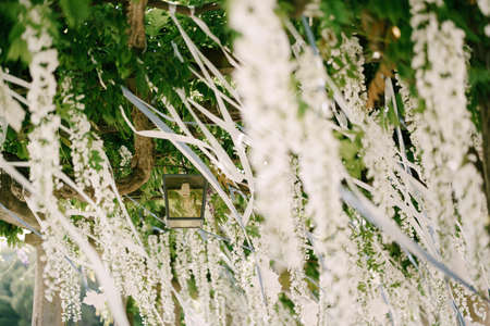 Street lamp on an arch in wisteria leaves with white flowers in bunches. Фото со стока
