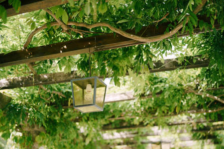 Metal hanging lantern on wooden beams of an arch in green wisteria leaves. Imagens - 159185556