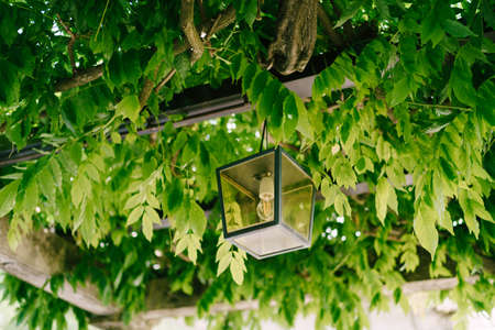 Metal hanging lantern on a metal arch in green wisteria leaves Фото со стока