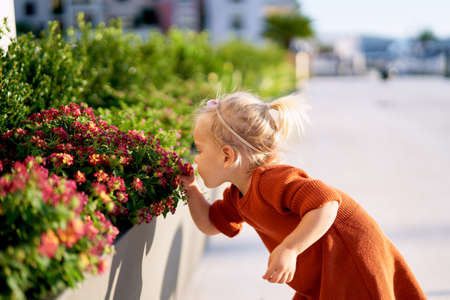 Little girl is smelling red flowers in a park on a sunny day