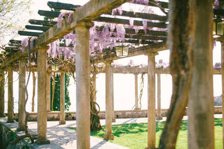 An ancient arch with stone columns and wooden beams with winding wisteria.
