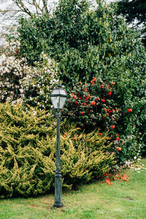 Street lamp on a pole in the garden on the grass with trees and bushes with red and white flowers. Фото со стока