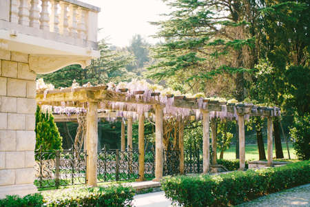 An architectural building with a large vintage balcony and an arch with winding wisteria in the courtyard against the background of tall trees.