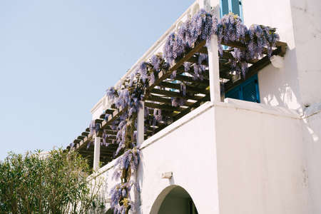 Lilac wisteria on the wooden beams of a white house with shutters. Imagens