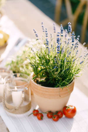 Lavender in a flower pot on a table with tomatoes and a candle in a jar.