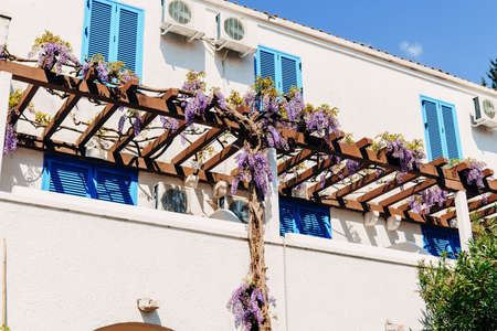 An arch-shaped wooden crossbar with winding wisteria near a house with blue shutters. Imagens