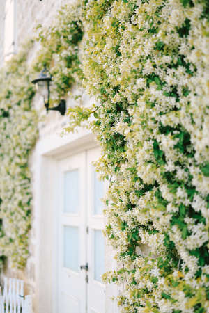 Jasmine winds around the door with a white door and a street lamp.
