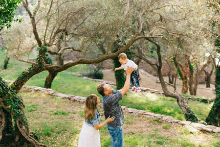 Happy family - mom, dad and little son together in the olive grove, dad lifts the baby up in his arms Banque d'images