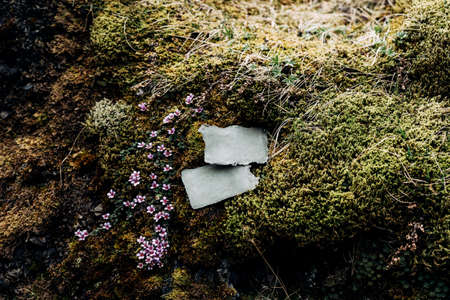 Blank plaques lie on stones overgrown with moss and green grass, surrounded by beautiful flowers