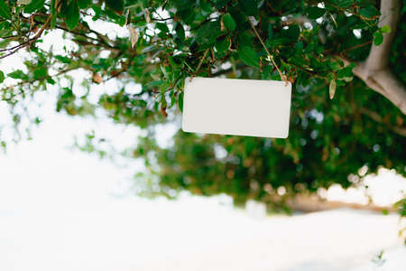 White plaque hangs on a string on a green tree Imagens