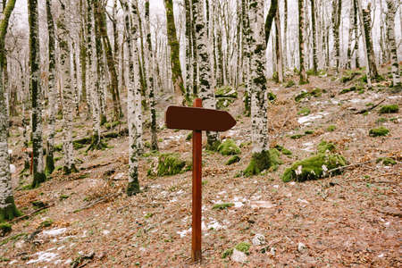 Wooden sign with an empty field stands in the middle of the forest on a hill