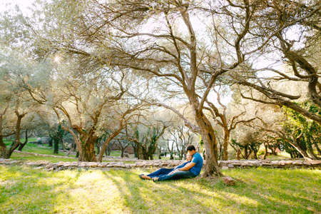 Man with a pregnant woman in a long blue dress lie on the grass under a sprawling olive tree in the park Imagens