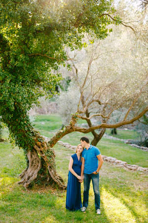 Man holds the hand of pregnant woman in a long dress against the background of a huge olive tree entwined with ivy