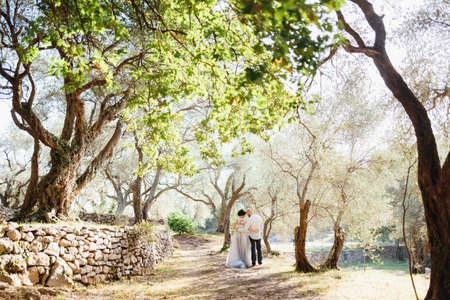 The bride and stand holding hands near the old stone wall among the trees in an olive grove, back view Banco de Imagens