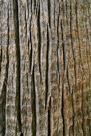 Gray bark of a large tree. Close-up Imagens