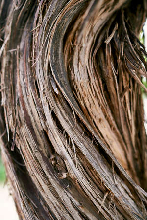 Brown curled bark of grapes. Close-up Imagens