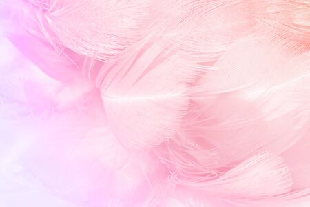 Closeup soft focus fashion Color Trends Spring Summer fluffy feathers abstract texture background Archivio Fotografico