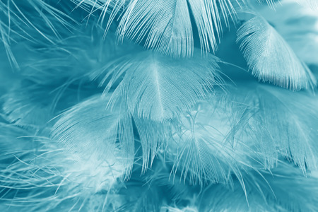 green turquoise vintage color trends chicken feather texture background Archivio Fotografico