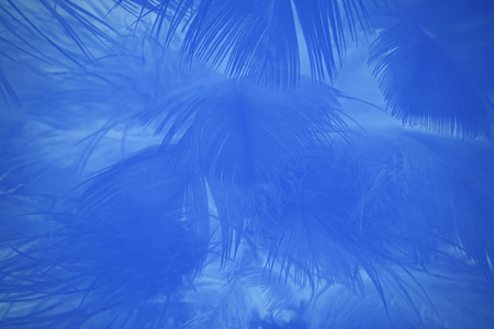 Blue color trends feather texture abstract background