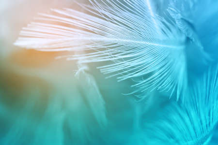 Green turquoise and blue color trends chicken feather texture background,Light orange