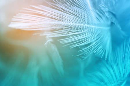Il turchese verde ed il colore blu tende la priorità bassa di struttura della piuma di pollo, arancione-chiaro