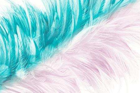 핑크와 녹색 청록색 색상 트렌드 깃털 질감 추상적 인 배경