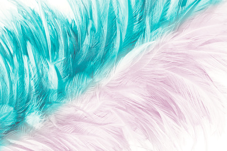 pink and green turquoise color trends feather texture abstract background