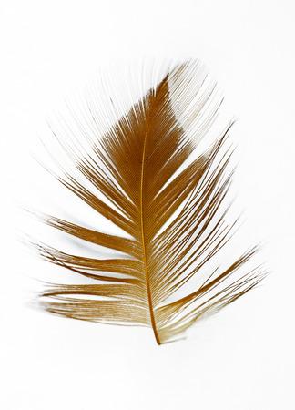 Chicken feather texture background Archivio Fotografico