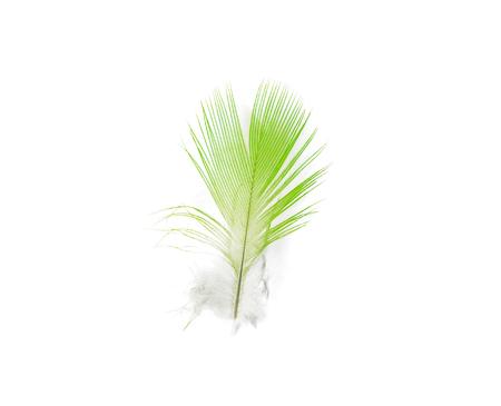 Beautiful bird feather on white background