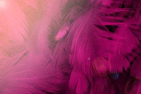 Beautiful pink magenta color trends feather pattern texture background with orange light flares