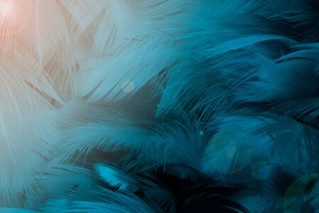Beautiful macro dark blue  colors tone  feather with orange light texture pattern background,trends color
