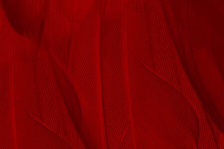 Beautiful dark red maroon feather pattern  texture background
