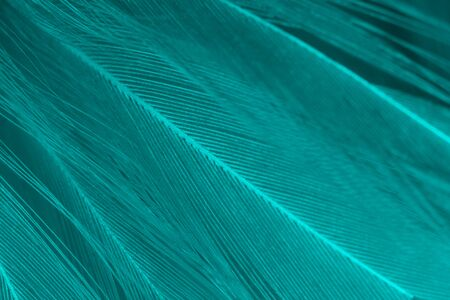 Beautiful green turquoise color trends feather pattern texture background Archivio Fotografico