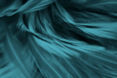 Beautiful black,green turquoise color trends feather pattern texture background