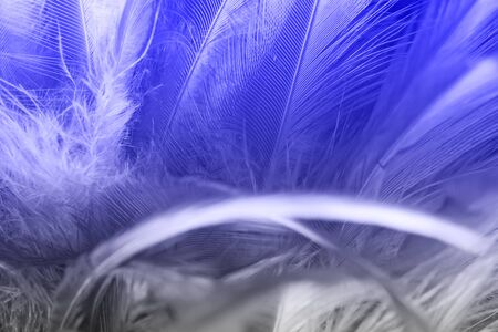 blue feather texture for background