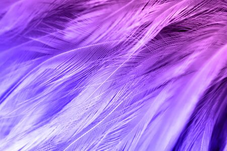 violet feather pattern texture background , pastel color style