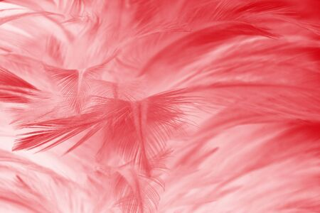 red maroon feather wool pattern  texture background