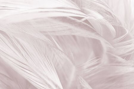 Beautiful white-brown feather texture background
