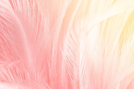 Beautiful soft pink color trends feather pattern texture background with orange light
