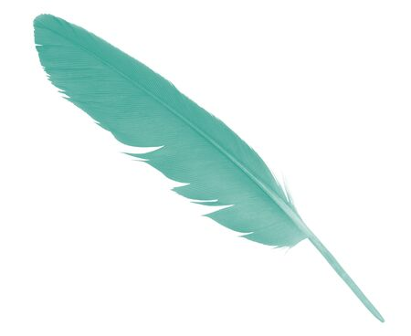 green  colors tone feather isolated on white background ,trends color Archivio Fotografico