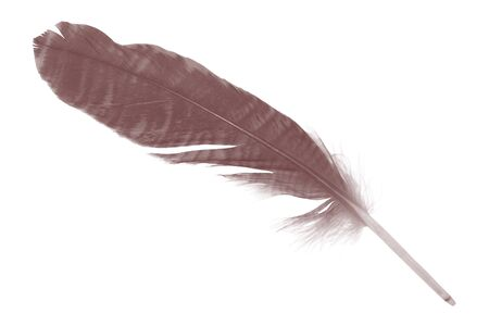 Beautiful white-brown feather isolated on white background Archivio Fotografico