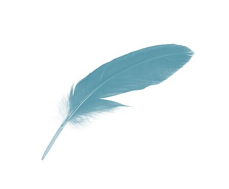 Beautiful Blue-green vintage color trends feather isolated on white background