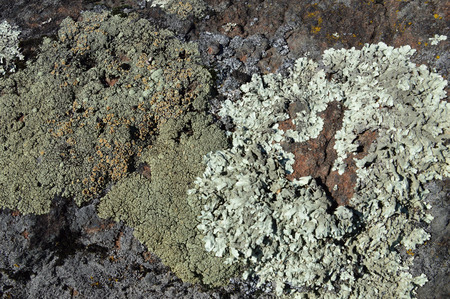 grew: Green moss grew on the stone. Lichen.