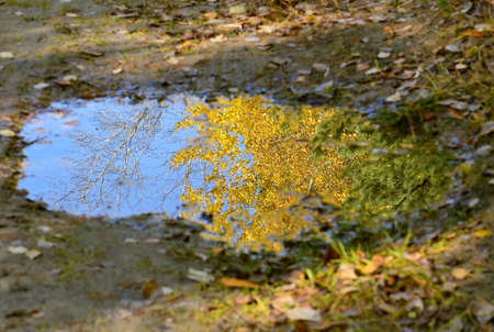 wilting: Autumn looks in the mirror puddles