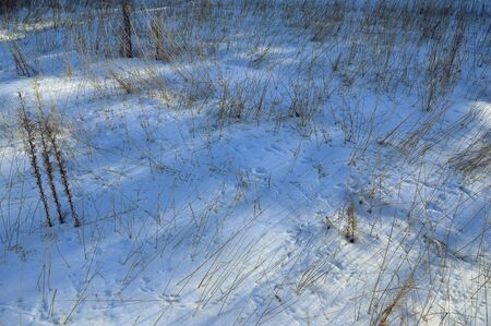 vogelspuren: The tracks of birds and mice in the snow on the field.