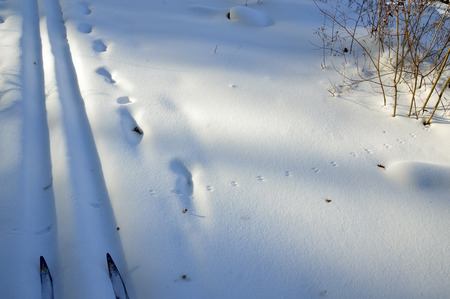 ski traces: Ski track, ski tips, traces of mice in the snow