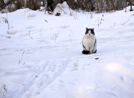 departing: Cat sitting in the snow and looks after the departing skier.